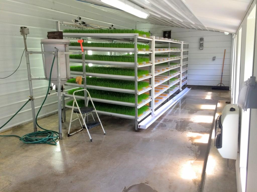 Our barley fodder system