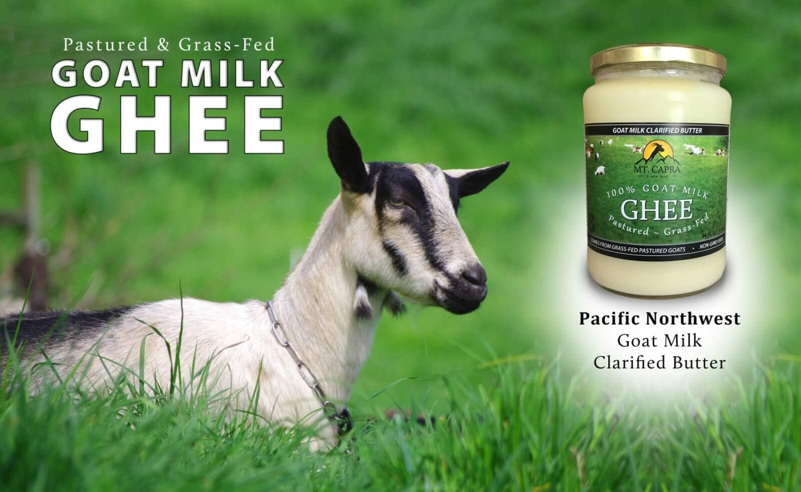 grass-fed-goats-milk-ghee-goat-in-field