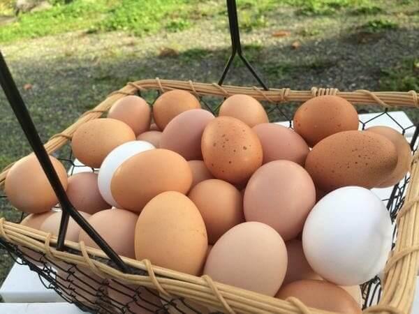 lewis-county-chehalis-wa-pastured-free-range-eggs
